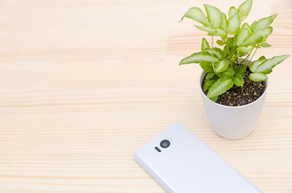 スマホと観葉植物
